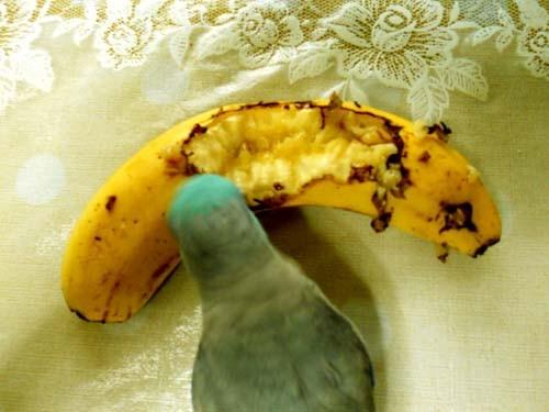 バナナを食べるあおい 炎と楽園のアート