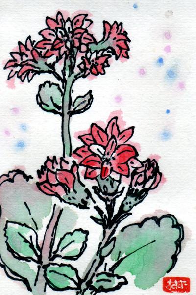 水彩画 カランコエ