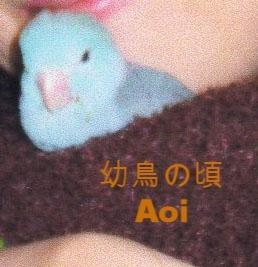 幼鳥の頃。 Aoi …老けません… 笑