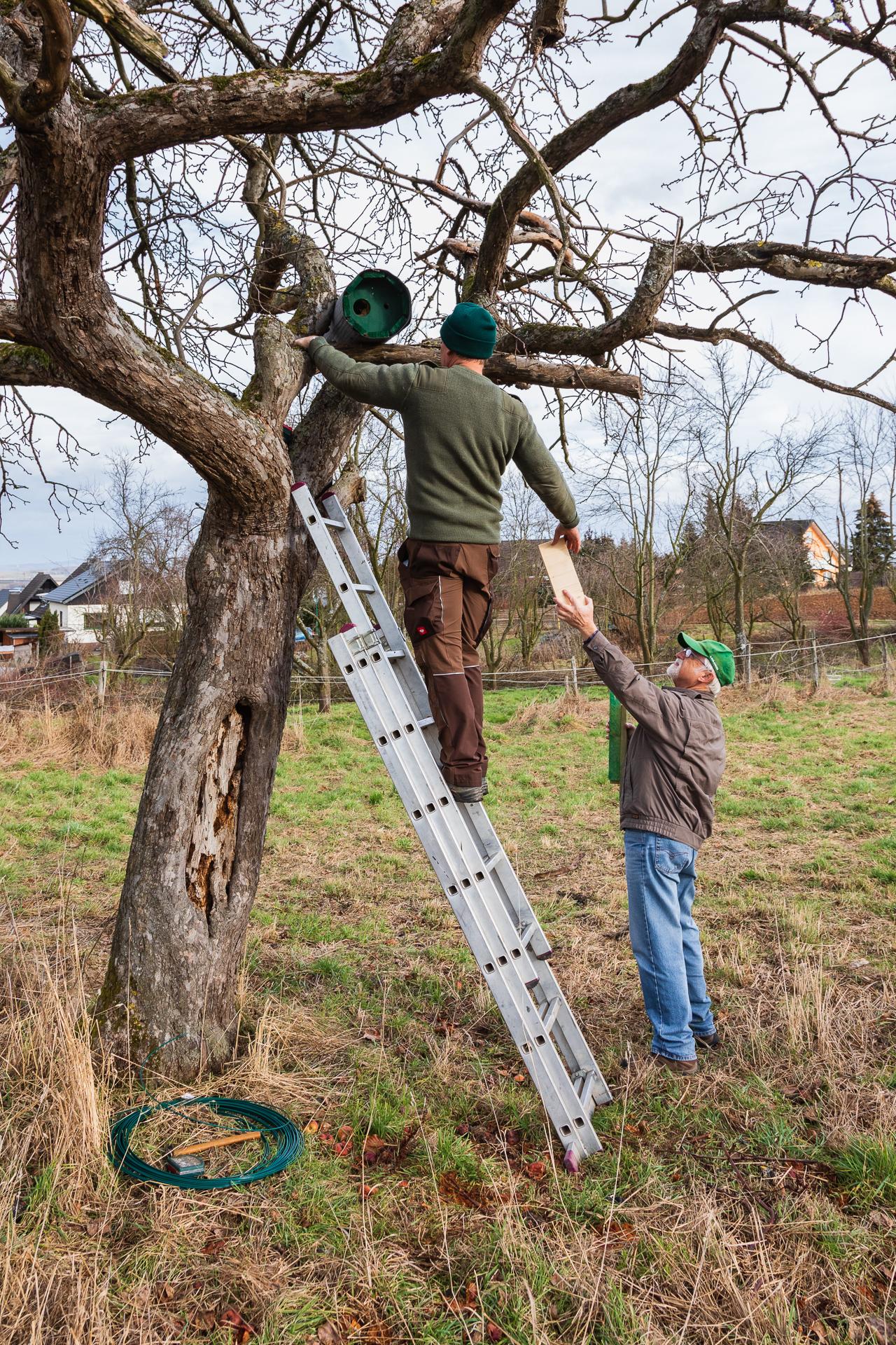 Jens Woitol und Alfred Pohl bringen den ersten Nistkasten an (Foto: Andreas Sebald)