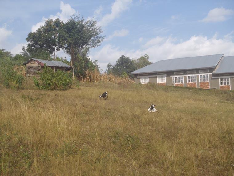 Das Grundstück für den geplanten Kindergartenbau.
