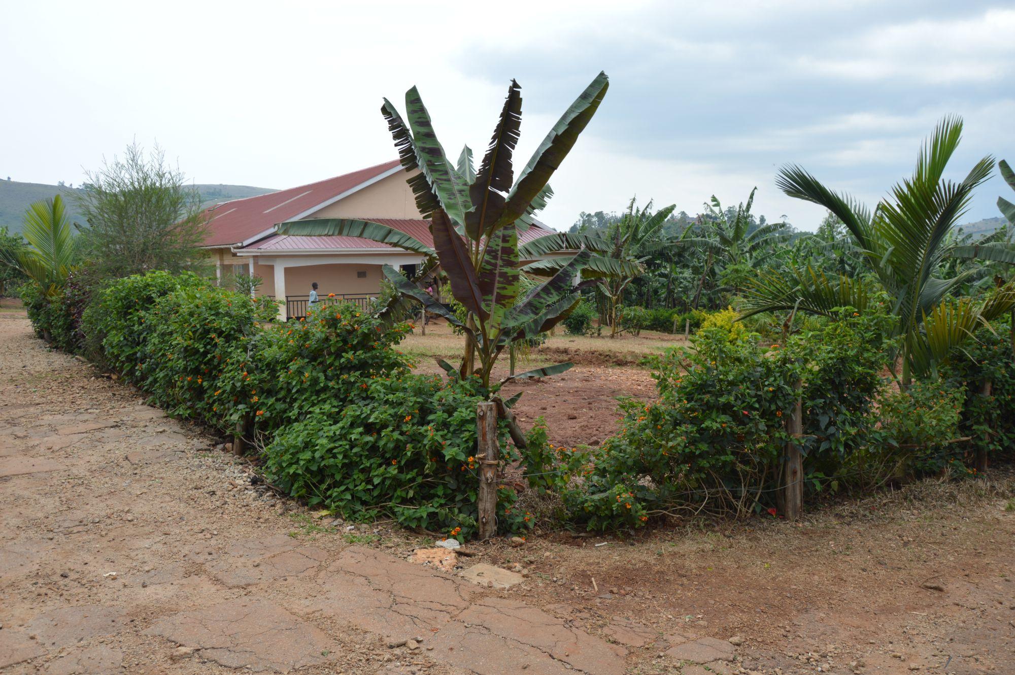 Bepflanzung des Schulgeländes in Ntungamo