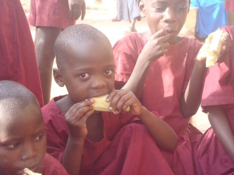 Kinder beim Casava (nährreiche Wurzelknollen) essen, ...