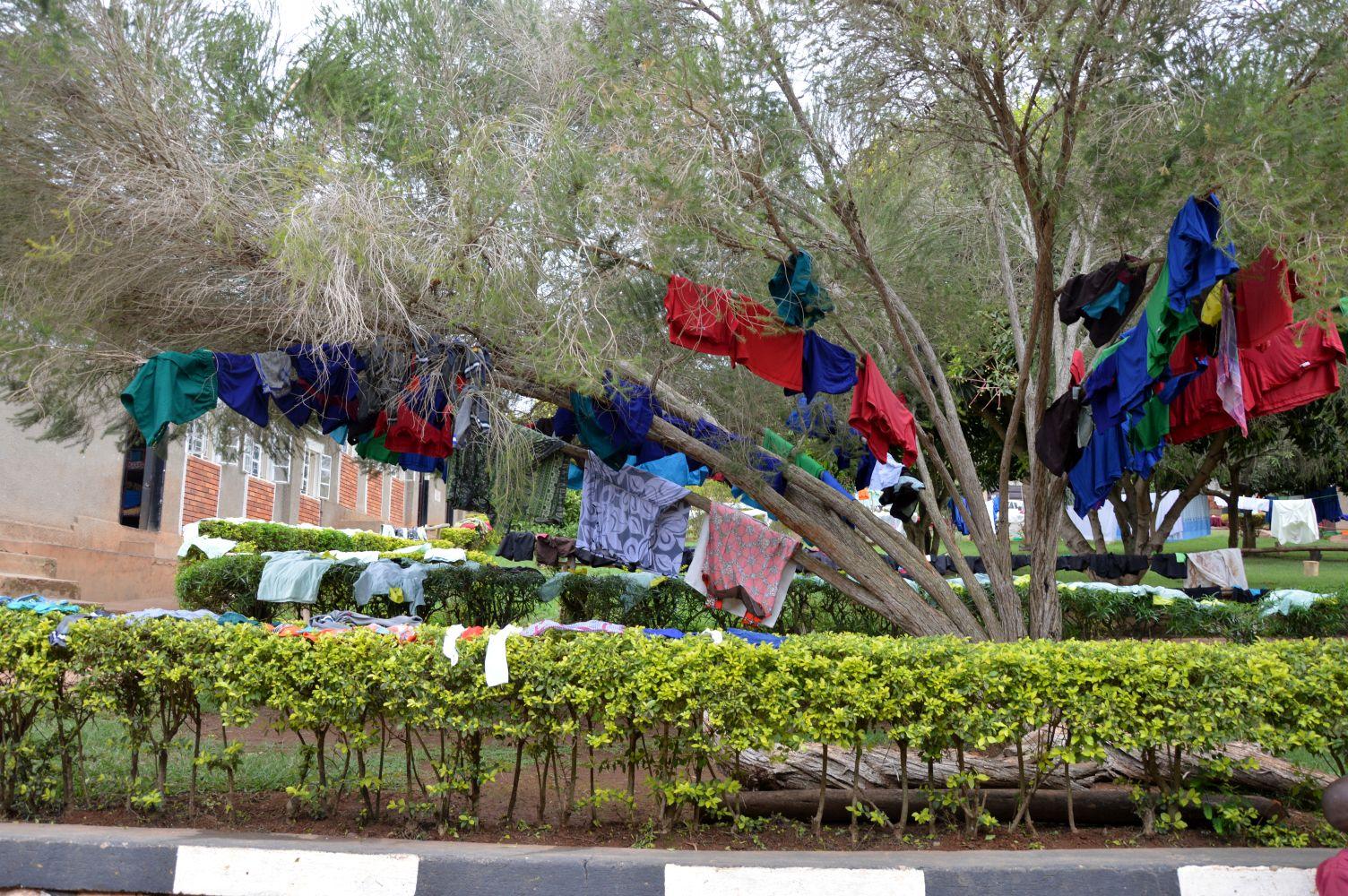 Wäscheständer oder eher Wäschebaum