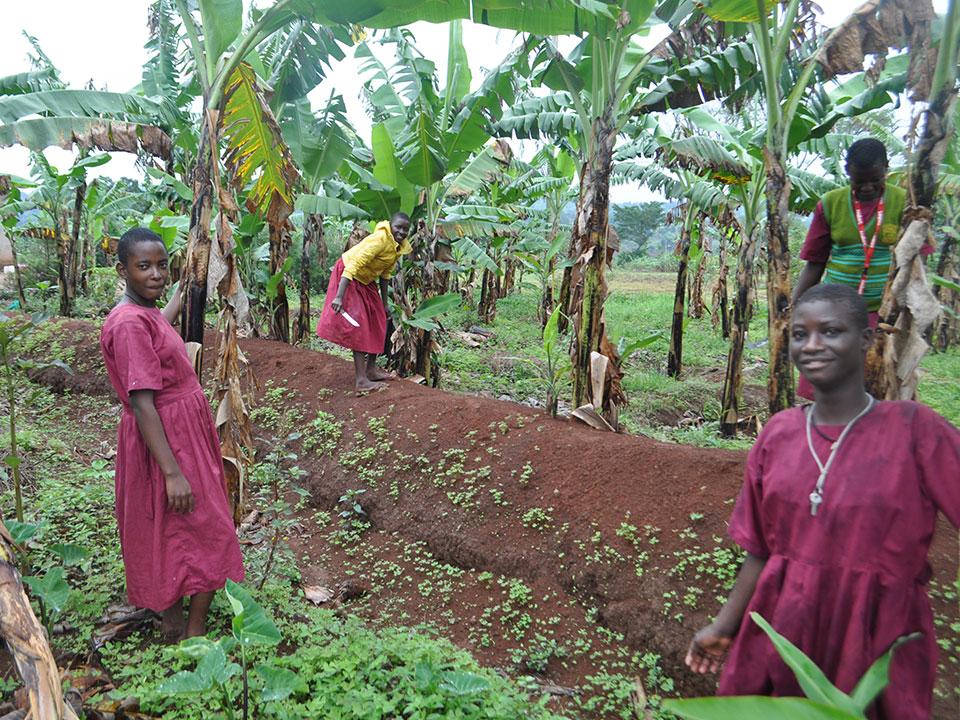 Die Mädchen pflanzen auf dem Feld Matooke (Kochbananen) an, ...