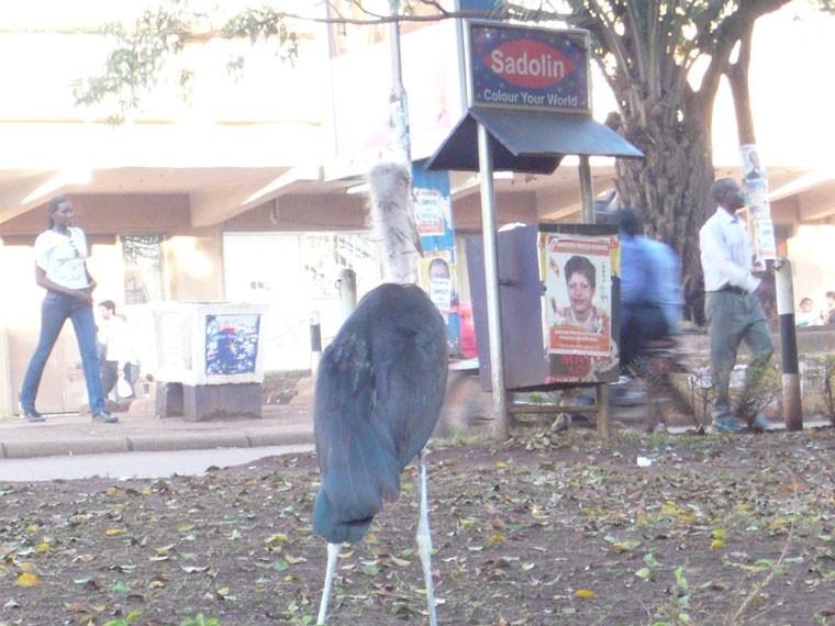 Nicht nur aus der Perspektive des Kranichs, dem Wappentier dieses afrikanischen Landes, ...