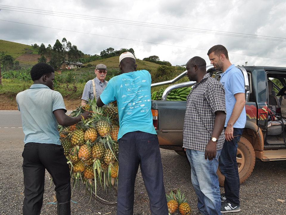Die 25 Ananas und 5 Bananenstauden werden auf den Geländewagen geladen.