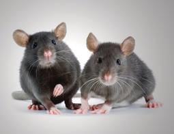 Rechte Maus...