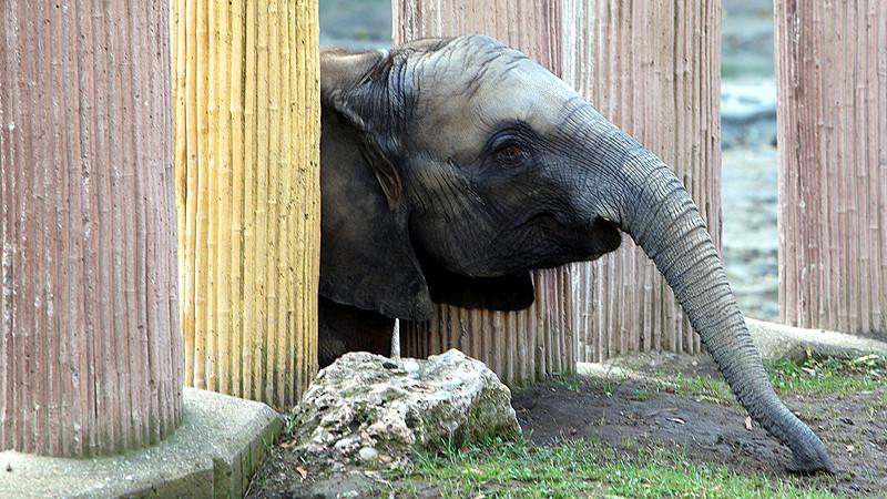 2015_12_zoo vienna