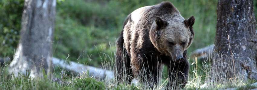 klick auf den bären und du kommst zum blog