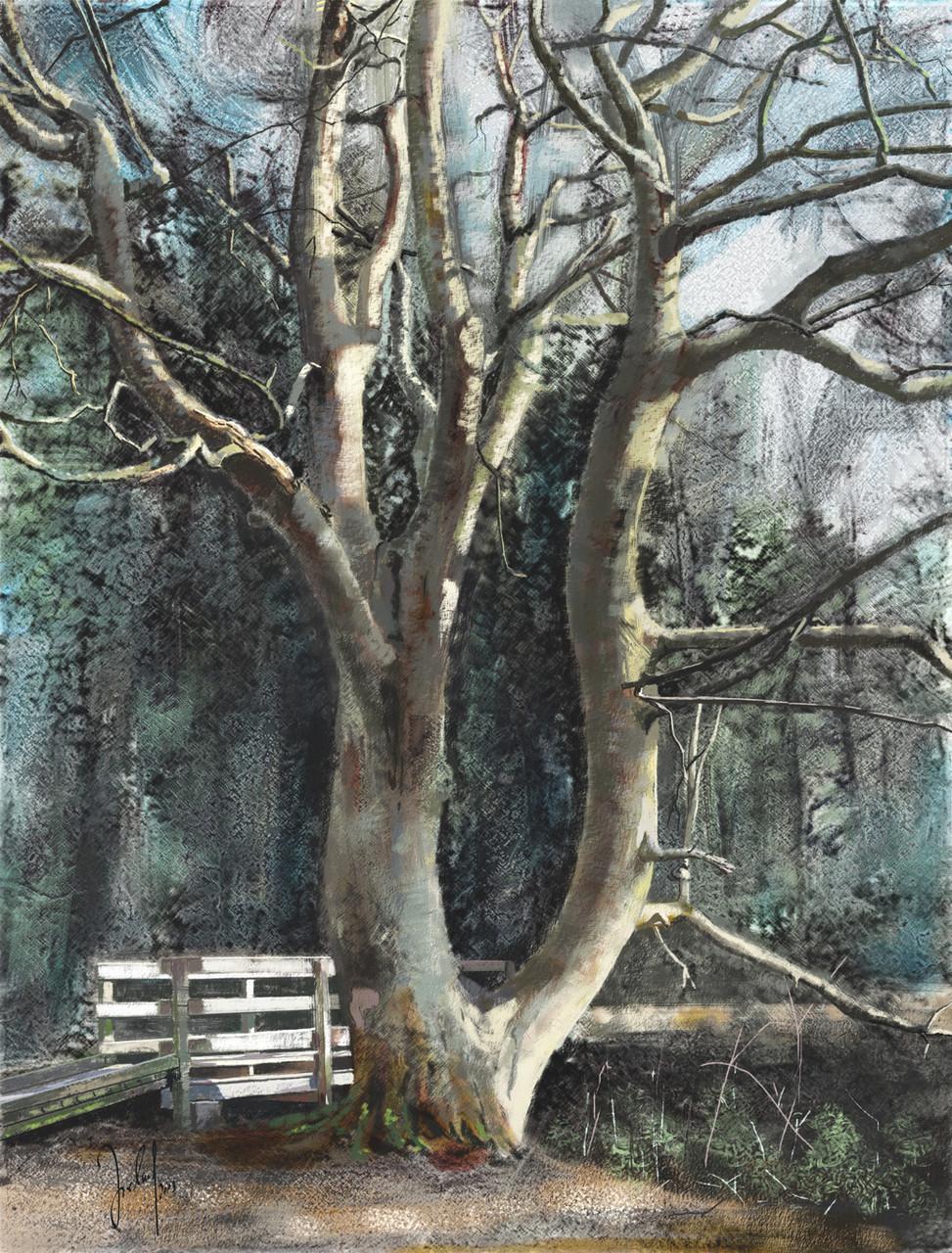 Sheila's tree