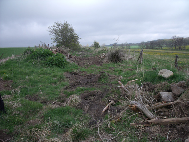 Trees removed /cleared from cutting. May 2012