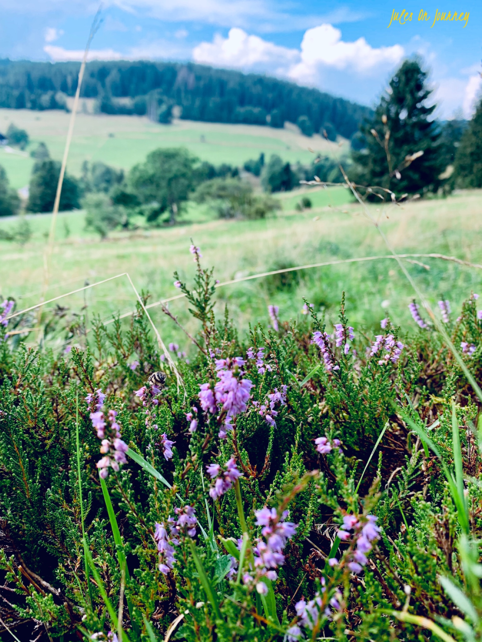 Blick ins grüne Tal