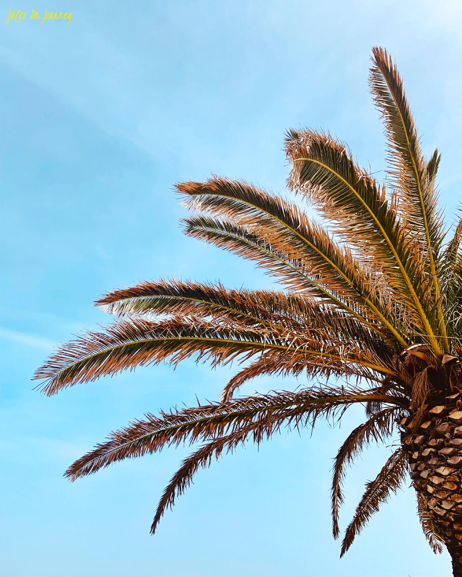 Die Straße am Petto Beach ist gesäumt von Palmen.