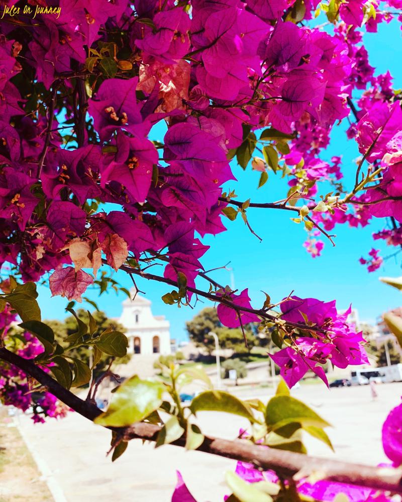 Ich liebe diese Blumen auf der Insel! Sie verzaubern einfach alles.