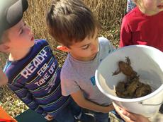 Viele Erdkröten wurden gesammelt (Bild: M. Wohlrab)