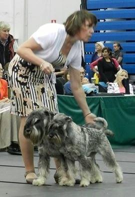 19.10.2014 Rakvere, Estonia, national dog shows Couples competition - II / конкурс пар - II