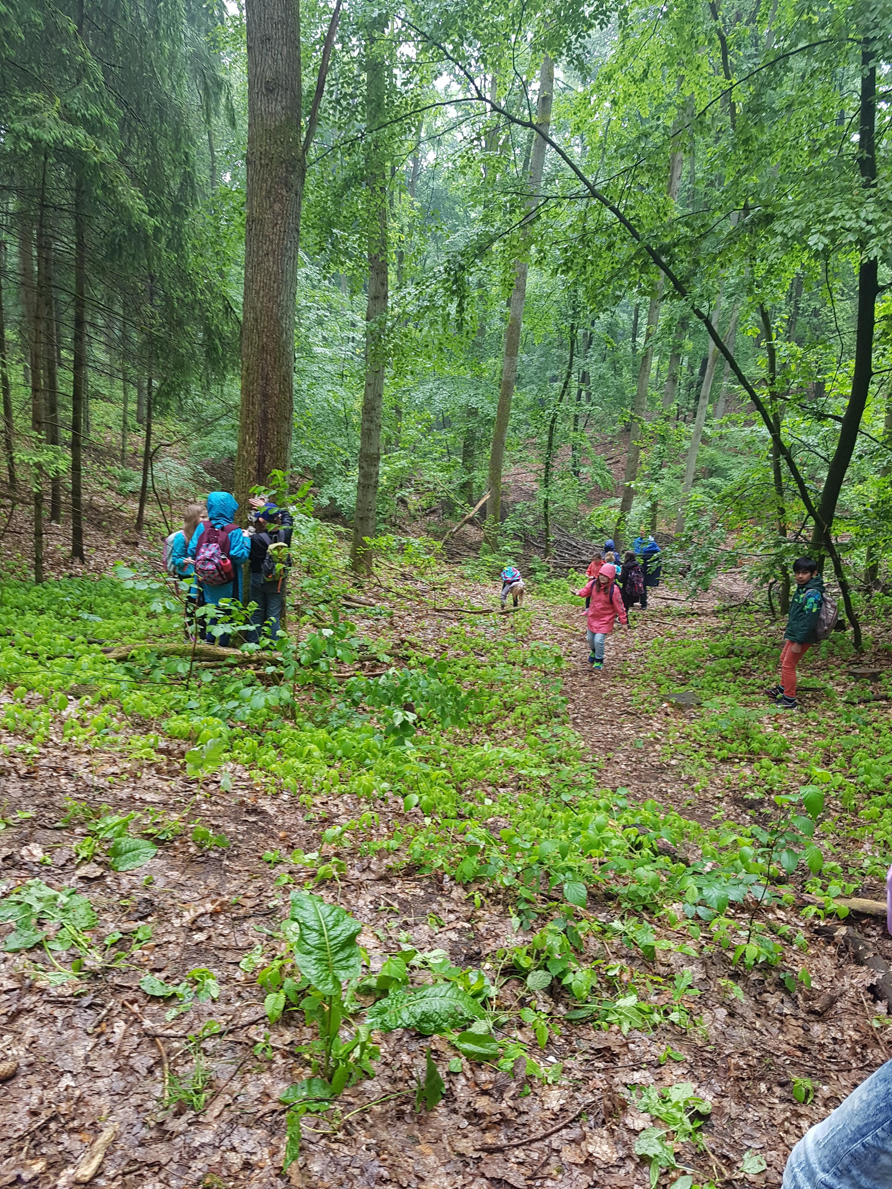 Auf Entdeckungstour im Wald.