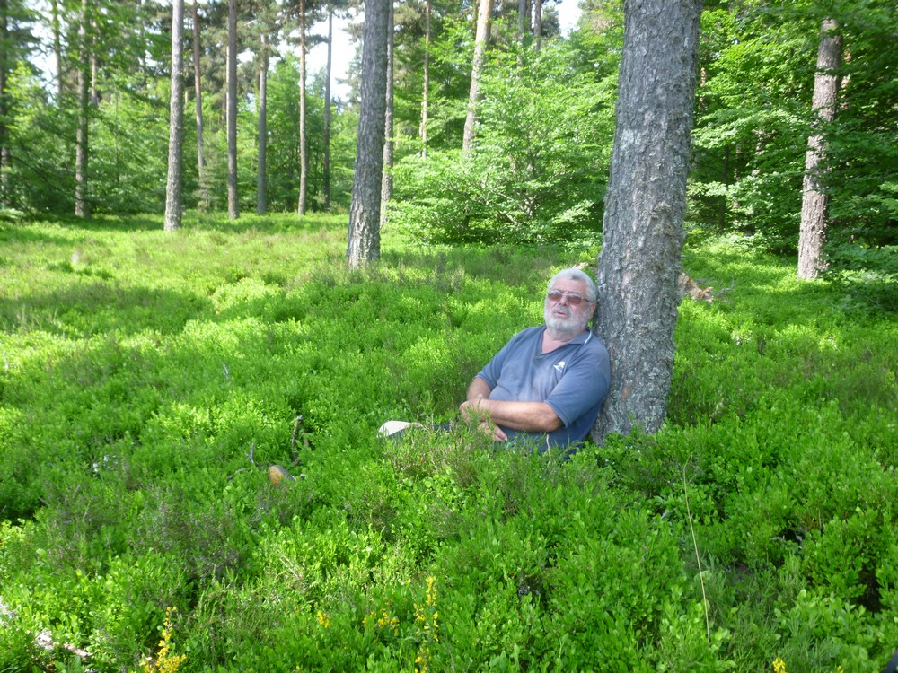 Luc dans un champs de myrtilles (en fleurs)