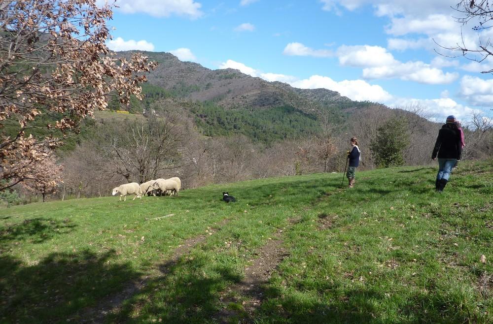 Rencontre avec une bergère et son chien