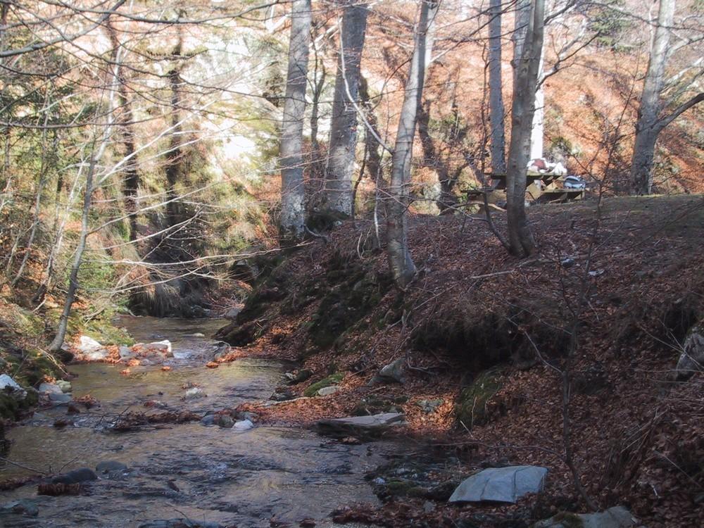 Un ruisseau dans les environs du mont Aigoual
