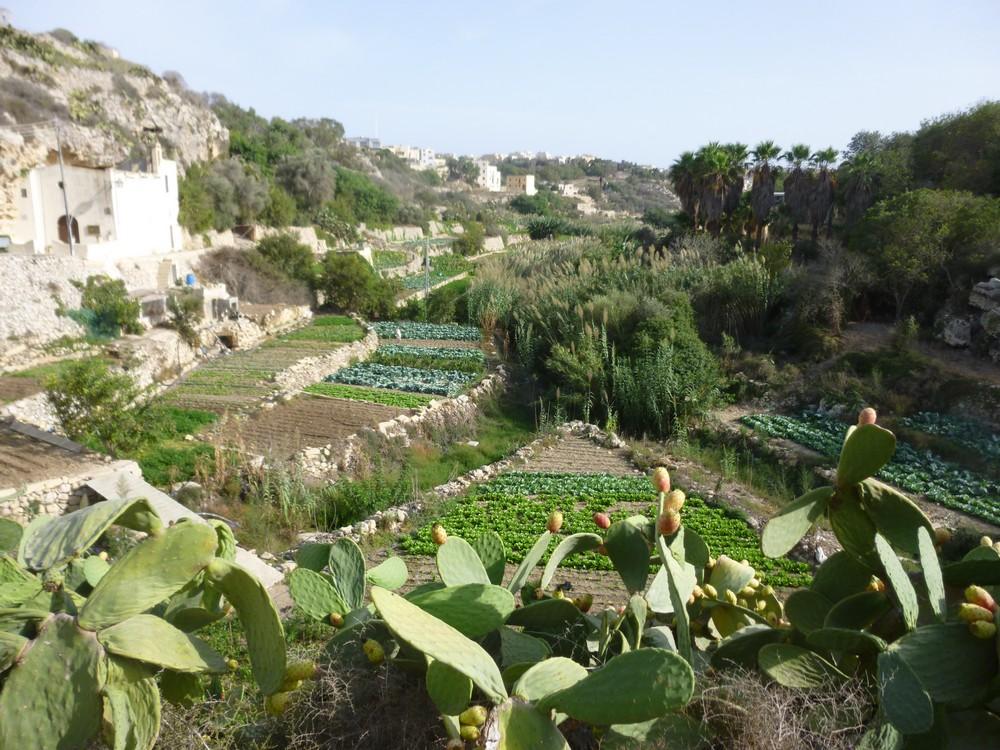 Une vallée cultivée sur Gozo