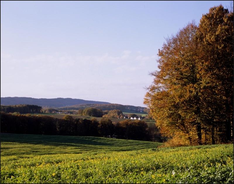 """Landschaft bei Hoberge nähe Bielefeld. Diese Aufnahme entstand auf 4x5"""" Fuji Provia 100F aufgenommen mit Rodenstock 5,6/210mm Apo-Sironar N mit einer Linhof Technika. Aufnahmedatum anfang November bei ungewöhnlich gutem Wetter."""