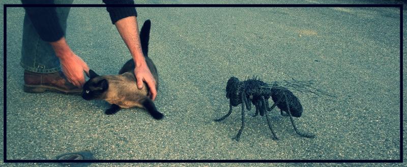 Deev Vanorbeek, artdeev     mouche metal art sculpture  40 cm                                               www.vanorbeek.com                                                      fil de fer , metal art,  sculpture d'insecte, recyclage