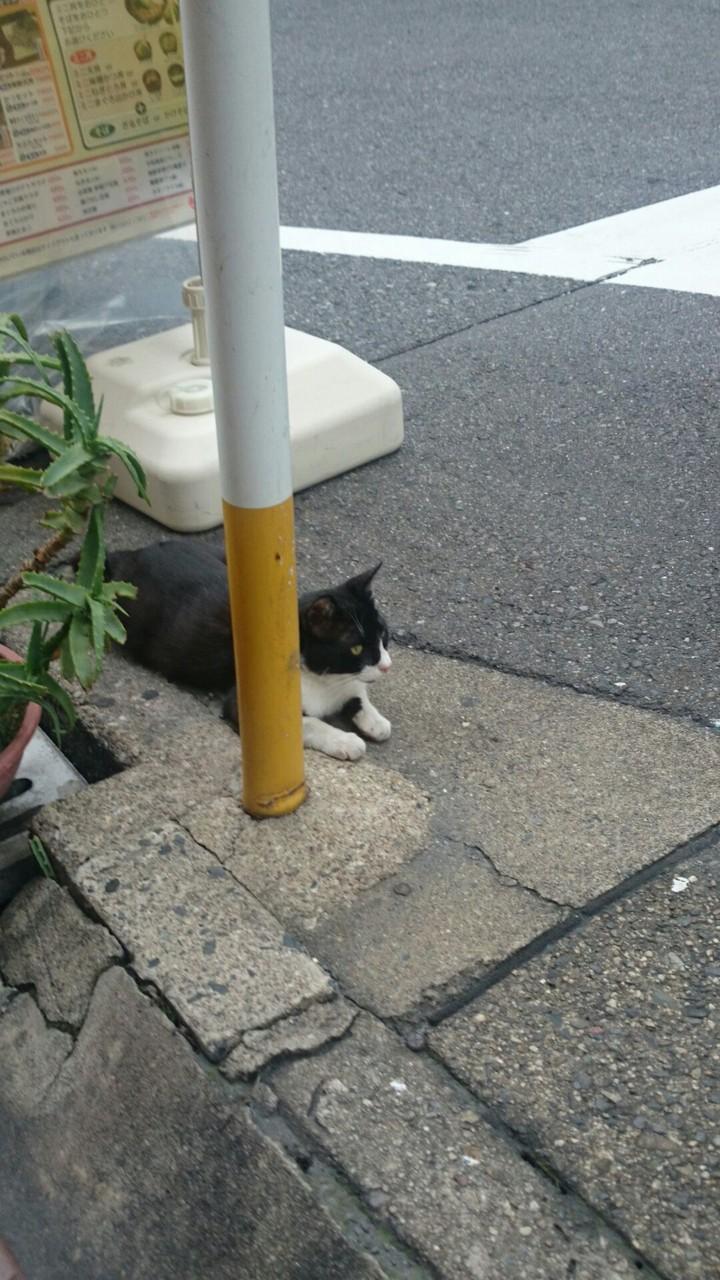 大須猫多し