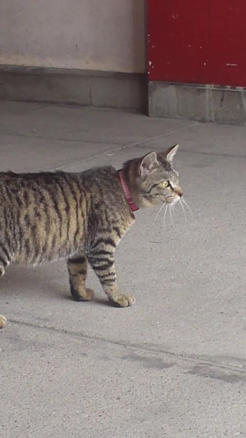 これは猫です