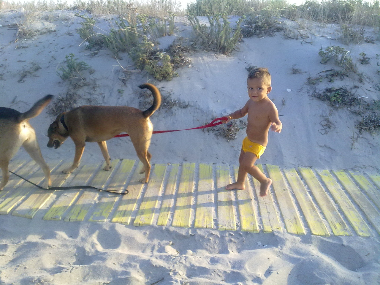 Il nostro più piccolo dog-sitter Matteo che porta a spasso Nocciolina