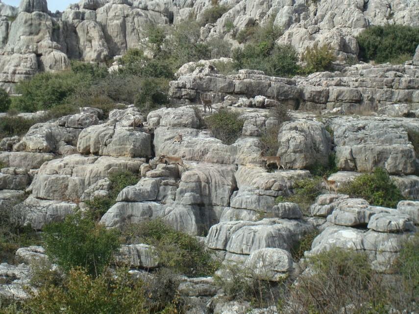 Formaciones Itinerario Ruta Verde y cabra montes