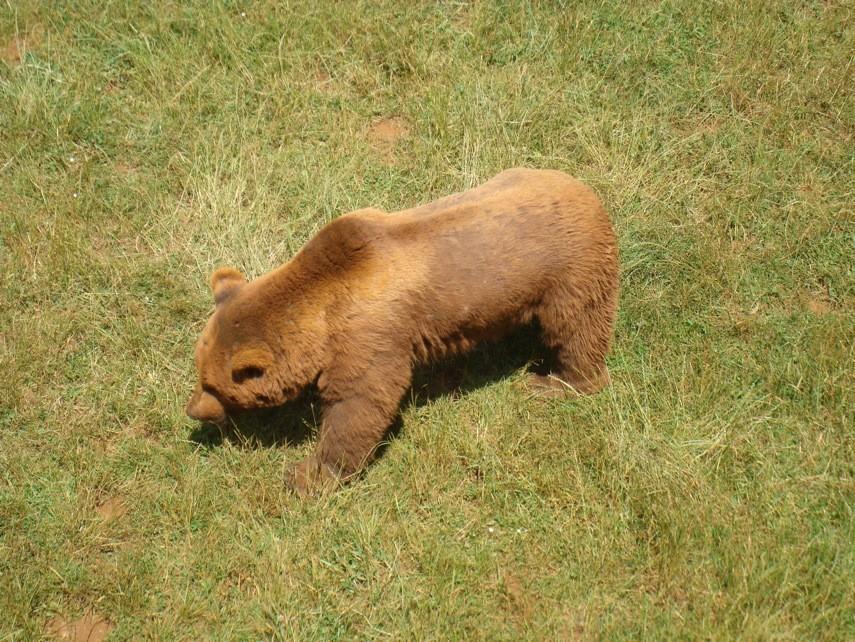 Recinto osos