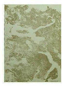 4.- Tu, mar desnudo, Litografía, mancha 45,5 x 33 cm., soporte 45,5 x 33 cm.