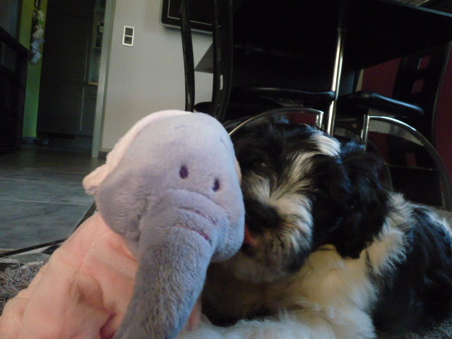 Benjamin der kleine Elefant.... Benjamin Blüüüüüüümchen...