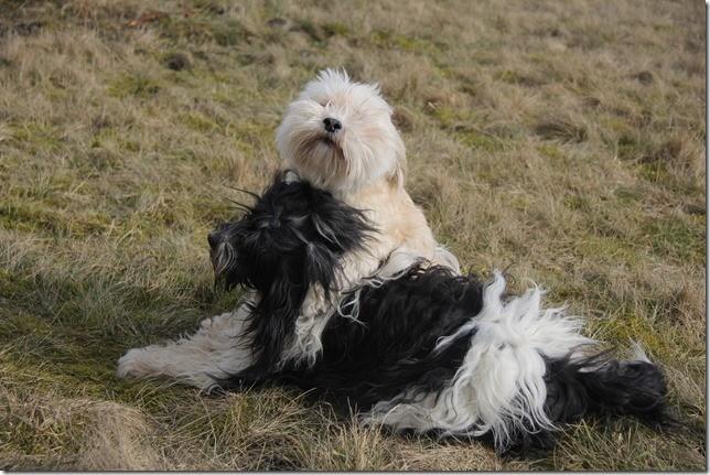 Amara und Teddy