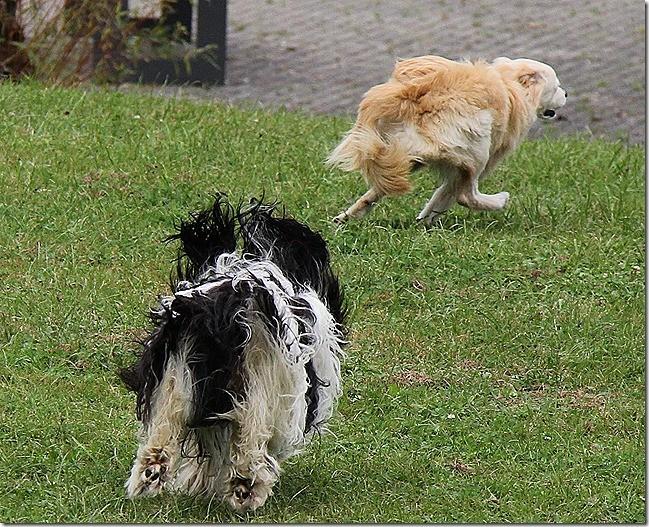 Jaaaaa, toben und andere Hunde ärgern. hihihi