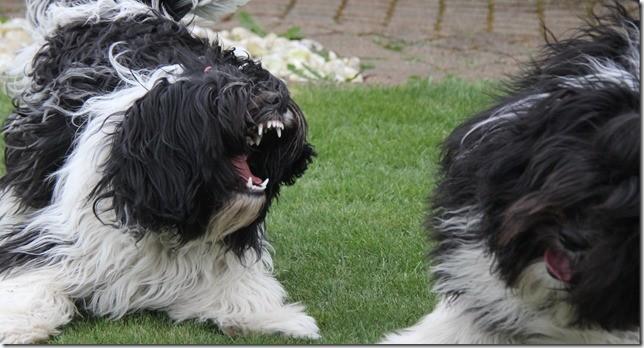 Amara zeigt Asco die Zähne