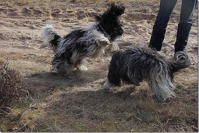 springend Amara, stehend Aliza