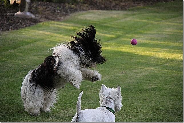 Mein Lieblingsball, Robin und ich