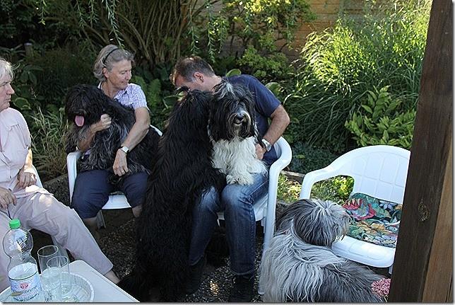 Darf ich mich auch vorstellen?  Ich flüstere es dir  ins Öhrchen:  Ich bin  Thijs von Belugas Huske. Soll ich dir mal mein Hundebettchen zeigen??