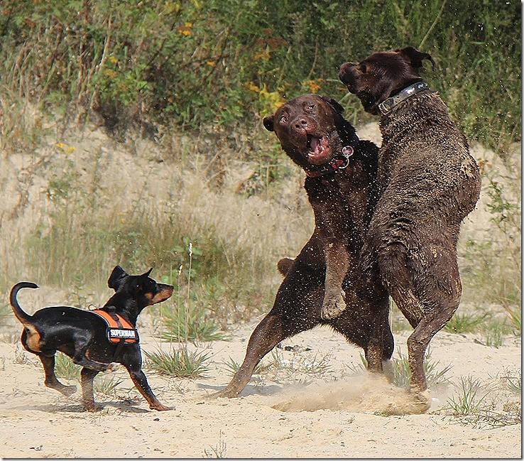 Dogdance in größter Vollendung! Lach!!!