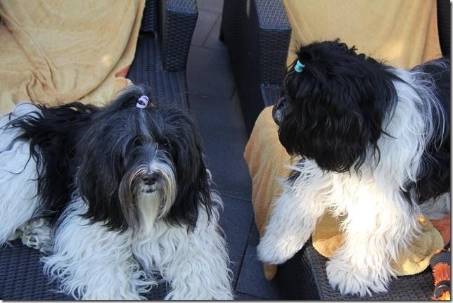 Willmi und Amara