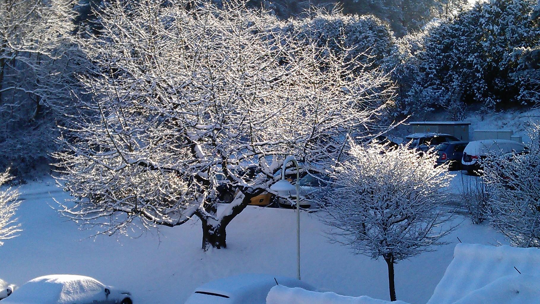Morgens Blick aus dem Fenster... damit hat keiner gerechnet! So schön!