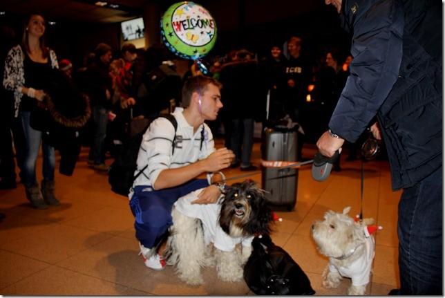 Begrüßung der Hunde