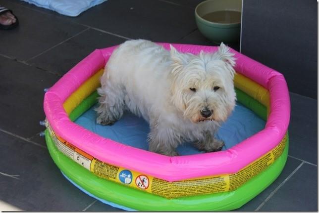 Hunde-Luxus-Pool  ;-)