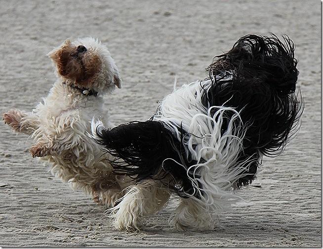 Dogdance auf Amrum