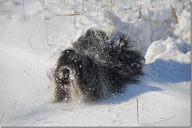 Ich kämpfe mich durch den Schnee