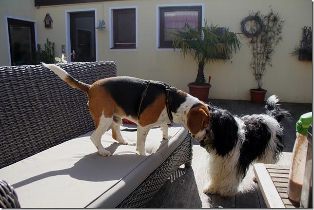 Benny und Amara