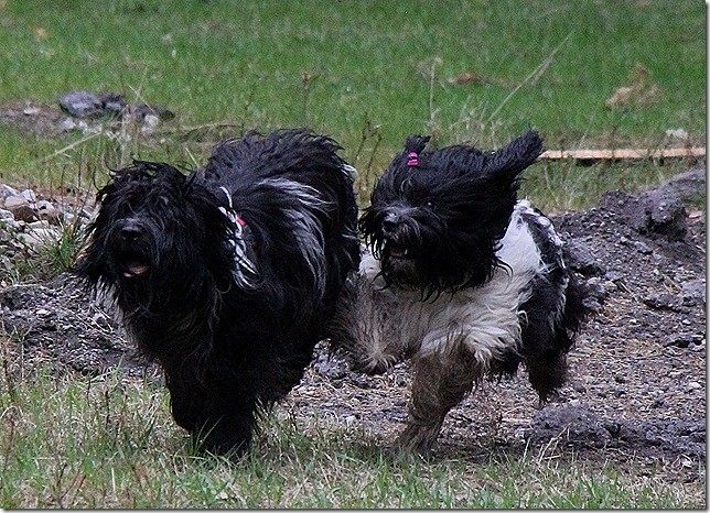 links Abby, rechts Amara